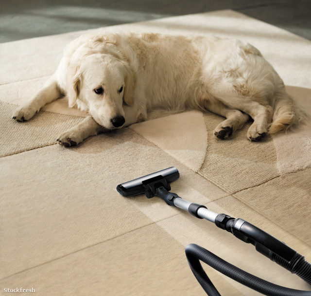 stockfresh 244250 carpet-dog sizeM