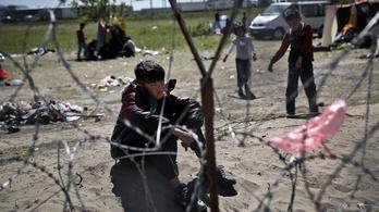 Minden évben több ezer gyerek tűnik el Európában