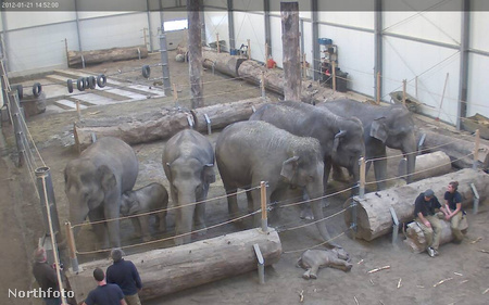 tk3s bm elephant 01001899