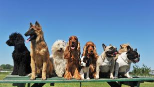 A kutyafajtáknak nincs személyiségük