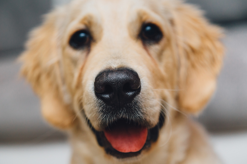 face-kutya
