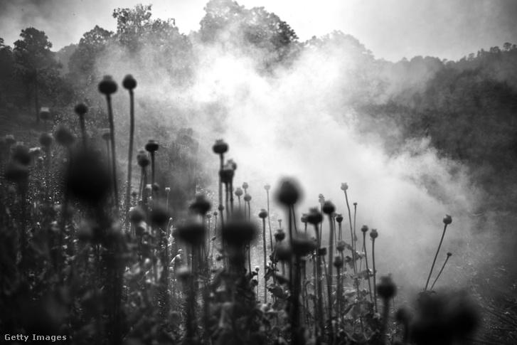 Katonák égetik a mákföldet, amit ópium termesztésre használtak Iyotla, Guerrero Mexikóban 2017. április 28-án