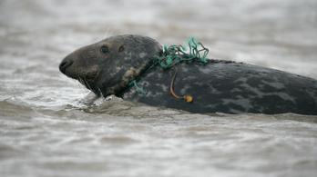 Partra vetett állatokat vizsgáltak, mindegyikben volt mikroműanyag