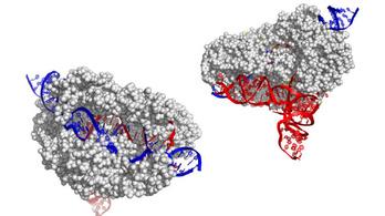 Itt a forradalmi CRISPR génszerkesztő új változata
