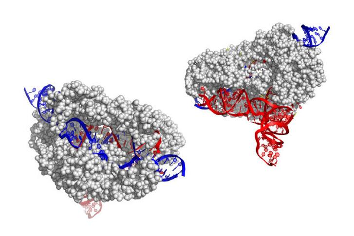CRISPR-CasX