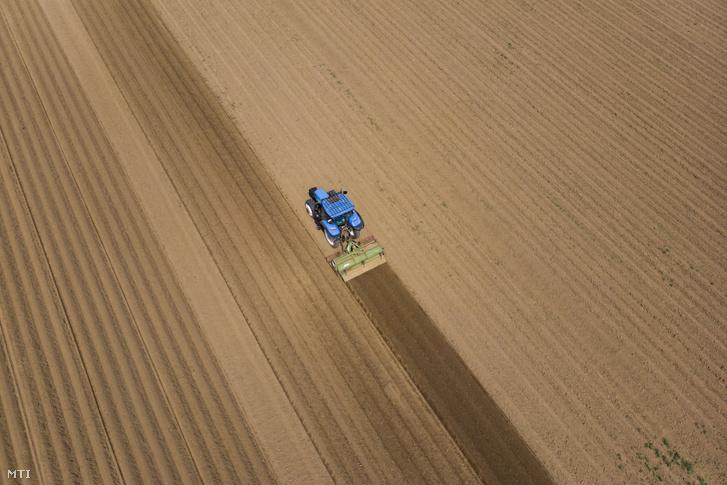 A burgonya úgynevezett töltögetését végzi, azaz újabb réteg talajjal fedi el a gumókat takaró bakhátakat egy mezőgazdasági munkagép Keszthely határában 2018. május 2-án