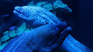 Hogyan töltődnek fel az elektromos halak?