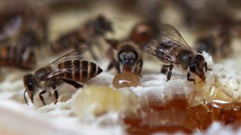 A méhek megértik a számtan alapjait