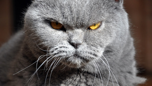 Rossz fej a macskád? Te tehetsz róla!