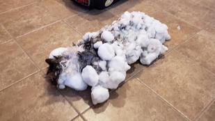 Összefagyott ez a macska a hó alatt, de túlélte