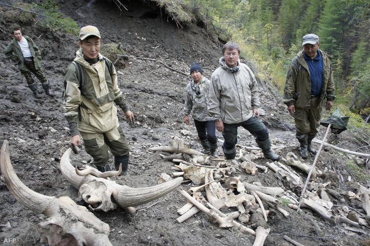 A kelet-szibéria Jakutföldön 2012. augusztus 28-án orosz és dél-koreia kutatók expedíciója során felfedezett ősmaradványok.