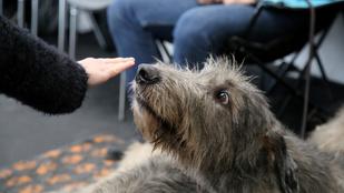 A kutyák tényleg kiszagolják a félelmet