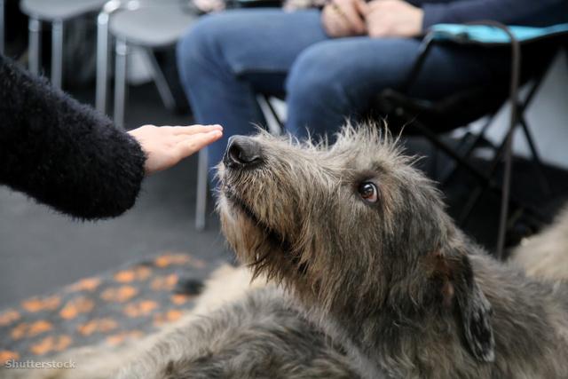 Hogyan öregednek a kutyák? – nyereményjáték