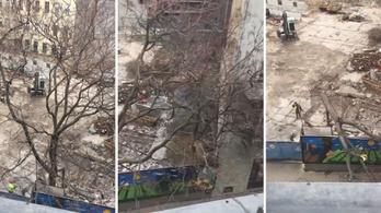 Megtervezték a nagy fa kivágását a Ráday utcában, ami aztán magasról tett a tervekre