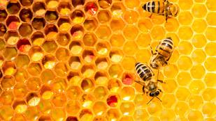 Kiválóan értik a méhek az elsős matekot