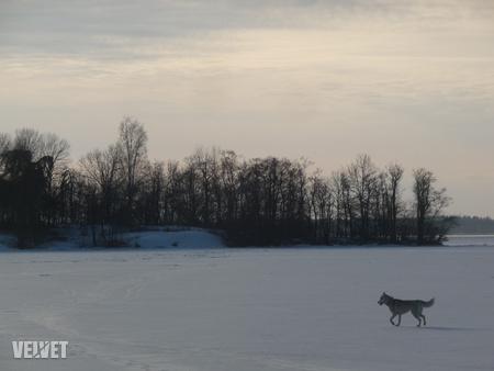 Egy elkóborolt kutya erősíti a sarkvidéki hangulatot
