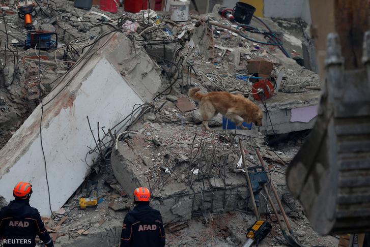 Mentőkutya keresi a lehetséges túlélőket a törmelék alatt Isztambulban 2019. február 8-án.