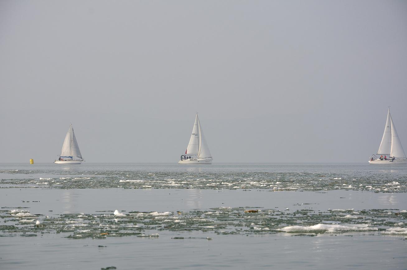farsangi-regatta-4