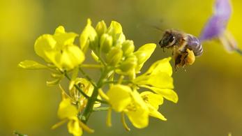 Globális katasztrófára figyelmeztetnek a pusztuló rovarok