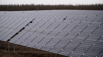 89 hektárnyi erdőt vágnak ki, hogy helyére napelemparkot építsenek