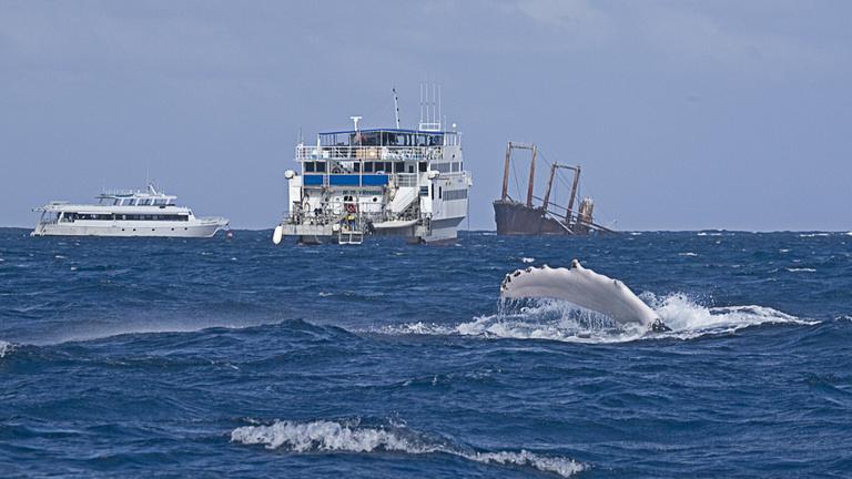 Fülsiketítő zajt okozunk az óceánokban