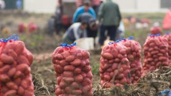 A krumpli és a zöldség drágább, a tojás olcsóbb lett tavaly óta