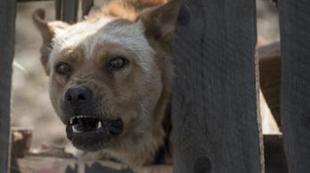 Miért olyan szörnyen idegesítő a kutyaugatás?