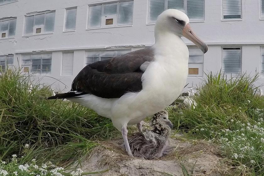 68 évesen lett édesanya a világ legöregebb madara: nagyon cuki a fiókája