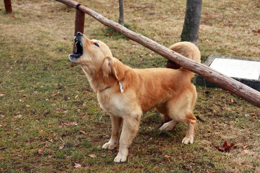 ugato-kutya