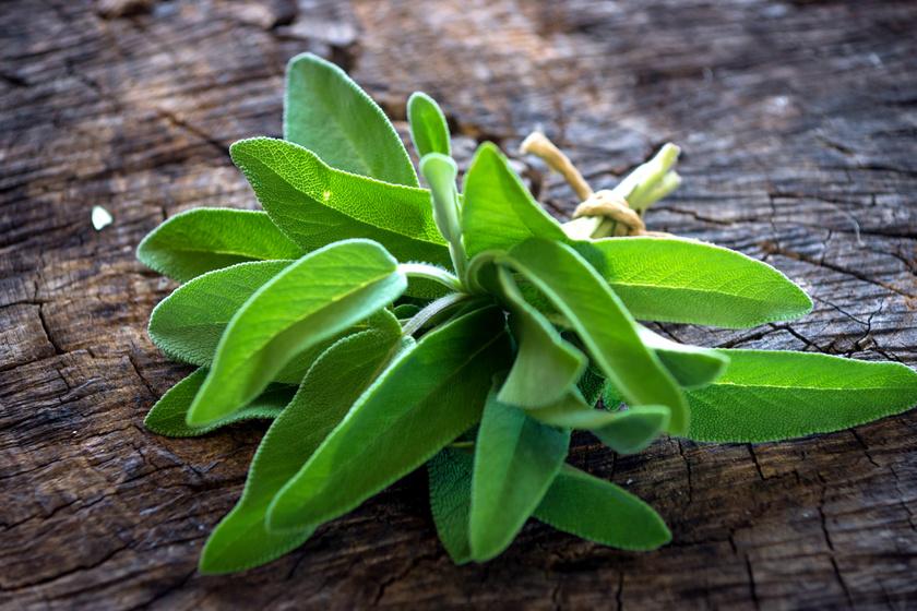 10 hatékony gyógynövény bélhurut és hasfájás ellen: gyógyszeres kezelés mellett is fogyaszthatók