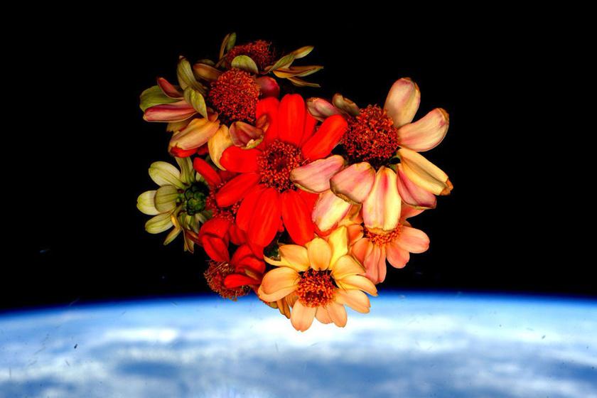 Nehéz überelni a NASA Valentin-napi köszöntőjét: ettől bárki elolvadna