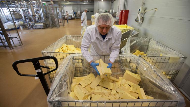 A sajtgyártás majdnem olyan szörnyű a Földnek, mint a húsipar