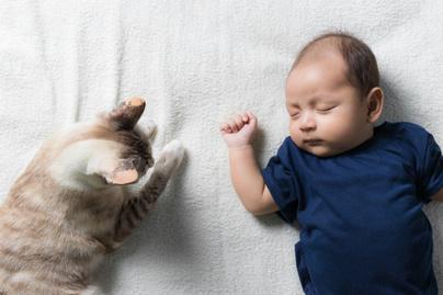 gyerek macska cica toxoplazmózis (1)