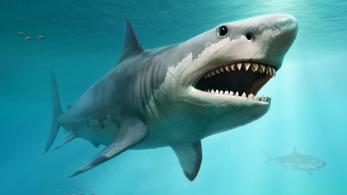 Nagy fehér cápák pusztították ki a megalodont