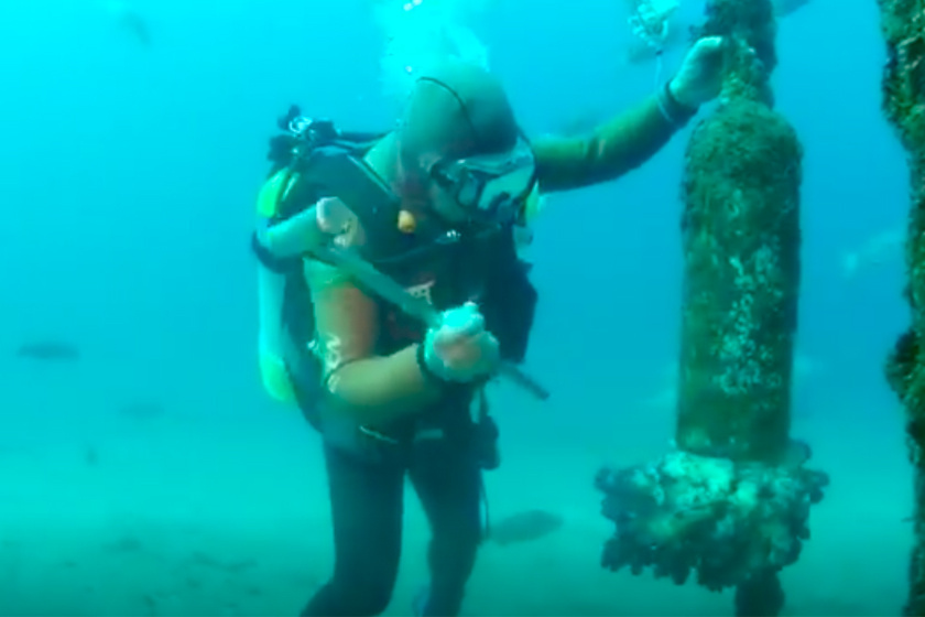 Ezen a fotón azt láthatjuk, ahogyan Hiroyuki Arakawa a fémeszközök segítségével hívójelet ad a halnak.