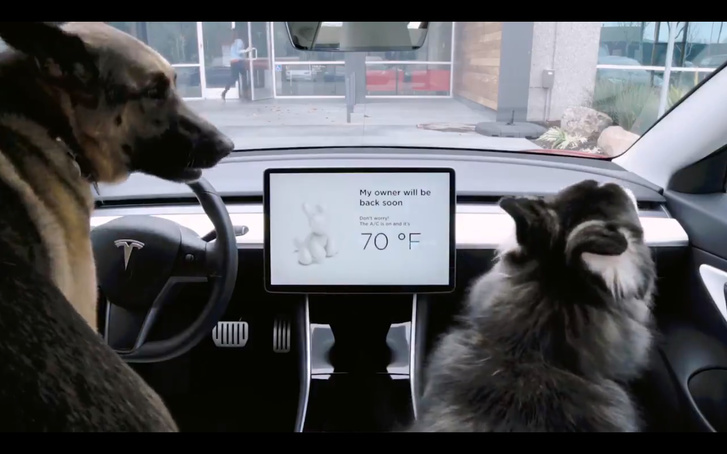 tesla-dog.mode