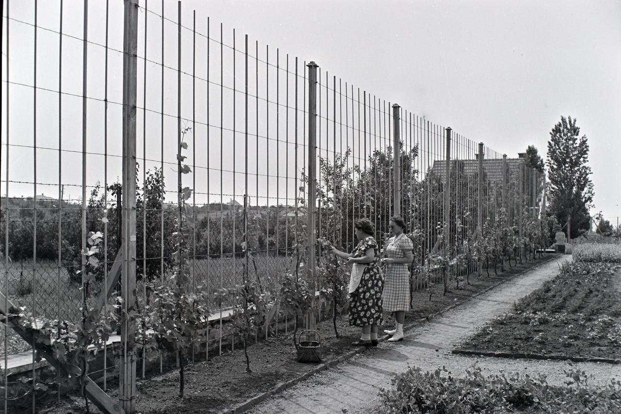 A térhatárolónak telepített szőlőt alighanem a ház úrnője maga gondozza épp - haszonnövények a gazdag kertekben is helyt kaphattak. Tájépítészt a két világháború között is csak kevesen fogadtak saját kertjük megtervezésére. És persze egy ekkora kert fenntartása nem volt olcsó mulatság.