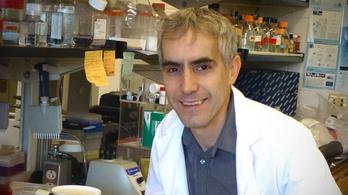 Génterápiával gyógyítanák a magzatok agyát