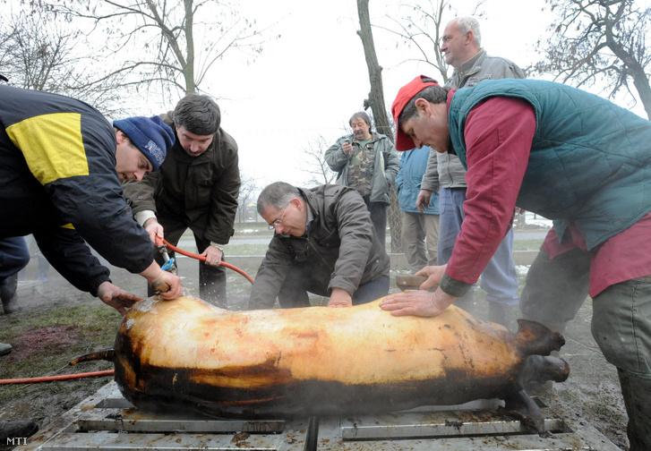 Pajna Zoltán, Debrecen alpolgármestere (b2) locsol, Kósa Lajos polgármester (b3) kapar egy perzselt disznót a Kismacsi Közösségi Ház udvarán 2010. március 13-án