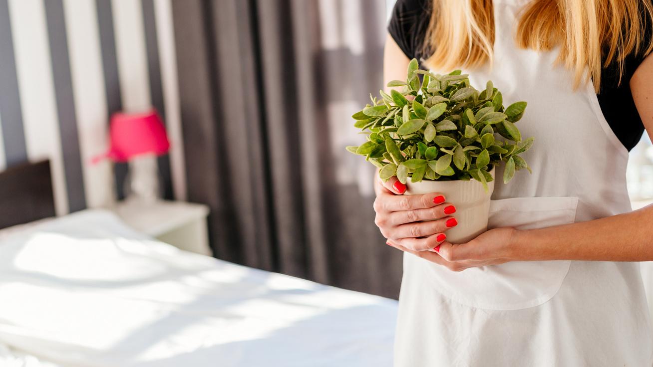 Így tisztítsd a növények leveleit: télen különösen fontos