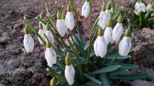 Idén korán érkezett a tavasz...