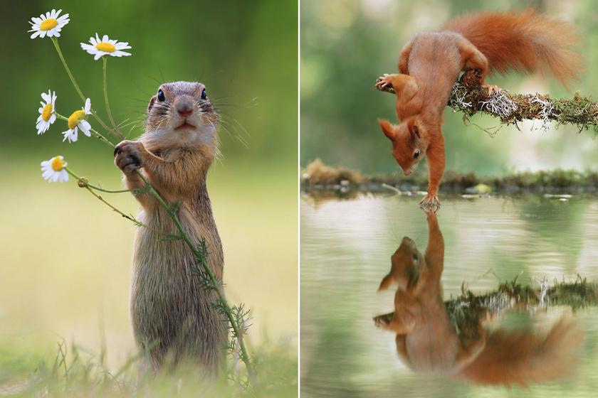 10 imádni való, állatos fotó, amiről csak úgy árad a boldogság és a szeretet
