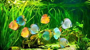 Algásodik az akváriumod? Tehetsz ellene!