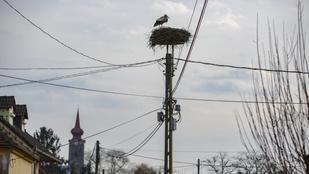 Ötvenezer középfeszültségű oszlop vált madárbaráttá Magyarországon