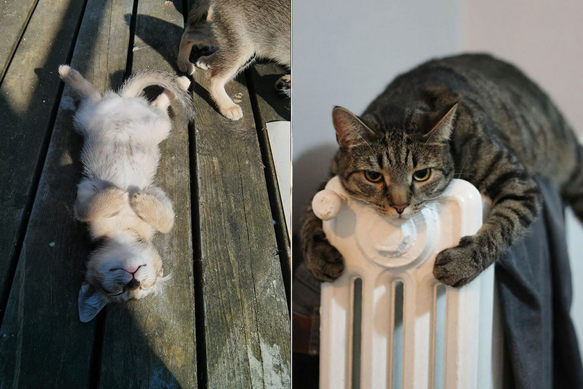 Nincs is jobb érzés, mint elterülni a radiátoron vagy a földön, és élvezni a meleget.