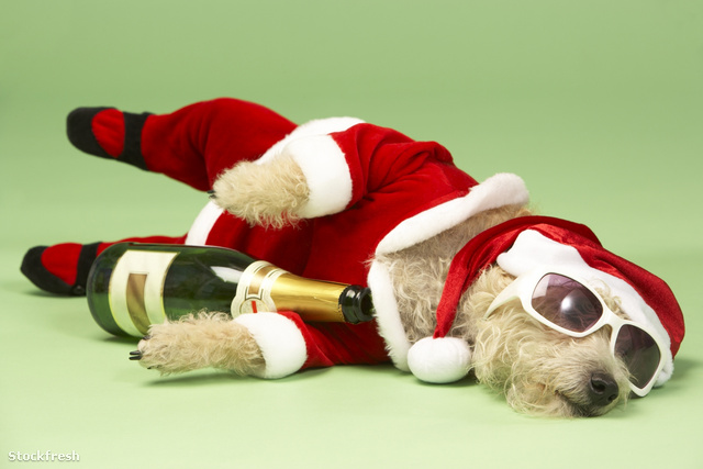 stockfresh 91596 small-dog-in-santa-costume-lying-down-with-cham