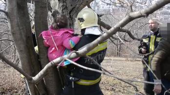 Tűzoltók szabadítottak ki egy fa ágai közé szorult kislányt