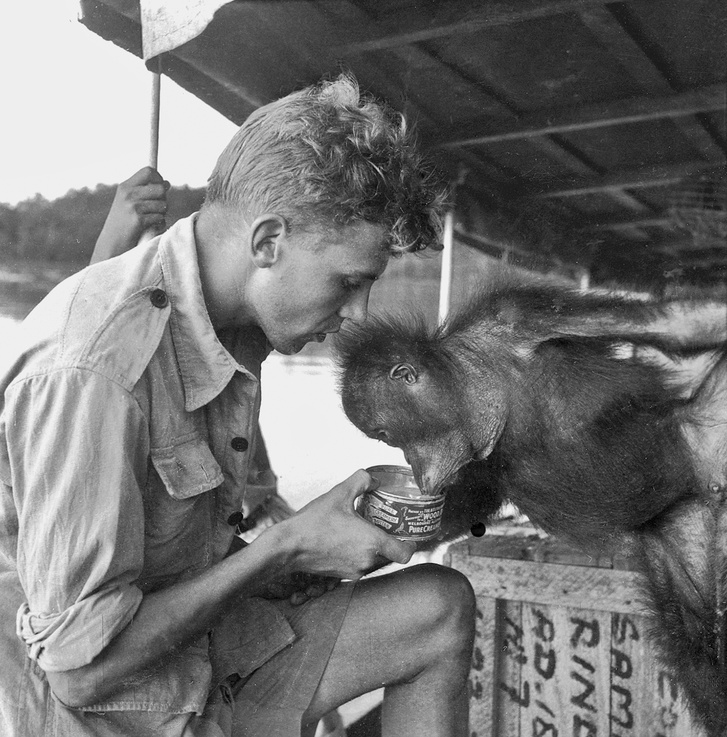 Charlie, az orangután, amelyet sóért és dohányért cserébe vásároltak egy helyi kereskedőtől, teát iszik egy hajó fedélzetén