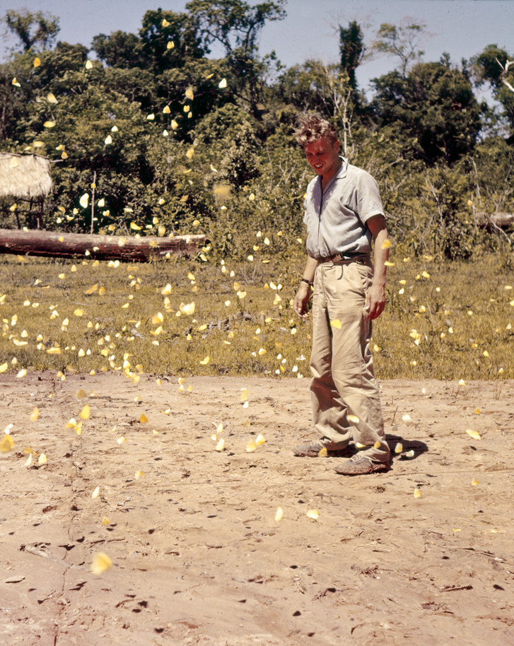 Pillangók forgatagában a Paraguayban