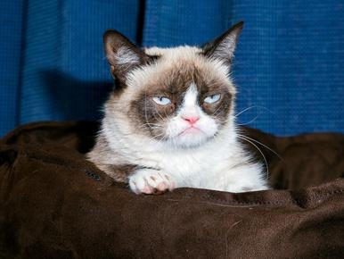 Sajnáljuk, de önben lehet a hiba, ha a undok a macskája